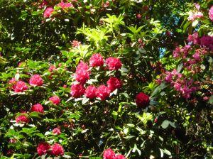 Pretty Flowers in Heaton Park